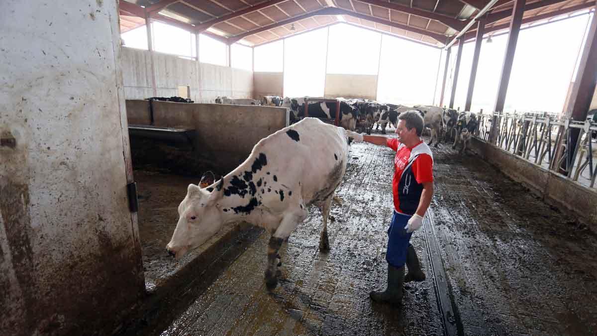 En el 2021, la producción mundial de leche crecería de manera «moderada», aseguro AHDB