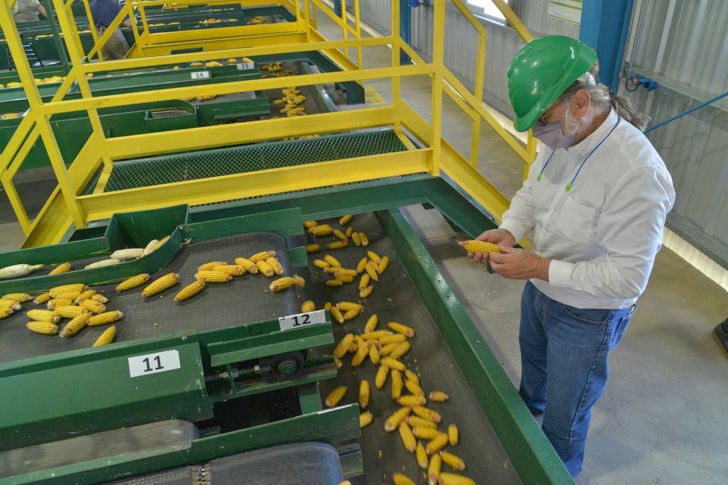 Agricultura formalizó el inicio de la cosecha de maíz 2020-21 en Santa Fe