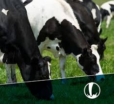 Principales países importadores de productos lácteos en América Latina