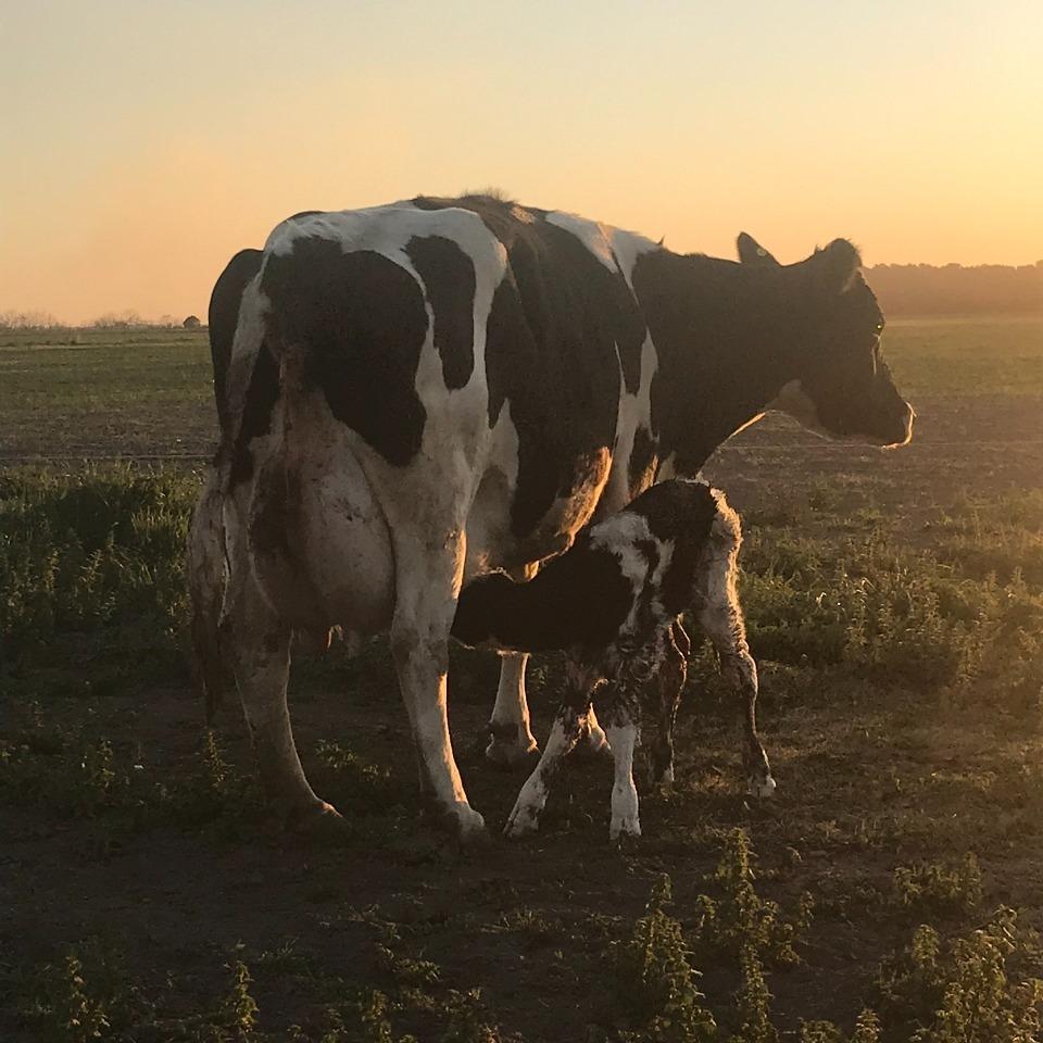 En marzo '21, la producción de leche alcanzó los 828 millones de litros