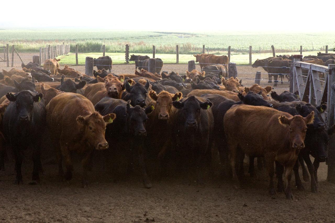 Actualización del Plan Nacional de Control y Erradicación de Brucelosis bovina