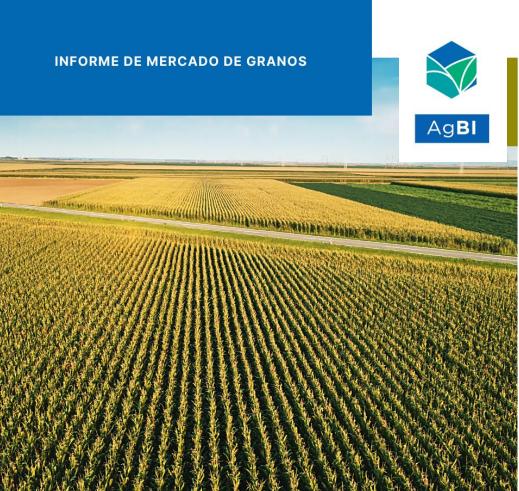 Firme demanda de maíz y la seca en América del Sur permite sostener precio del cereal