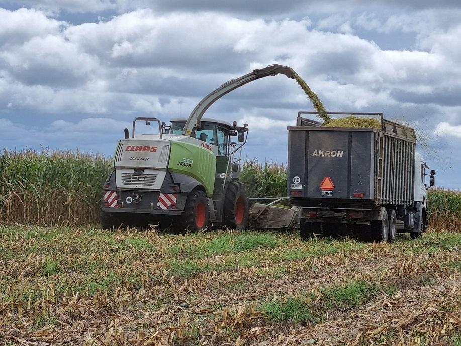 El ciclo del maíz 21-22 podría producir un récord de 54 M/tn, según Bolsa de Rosario