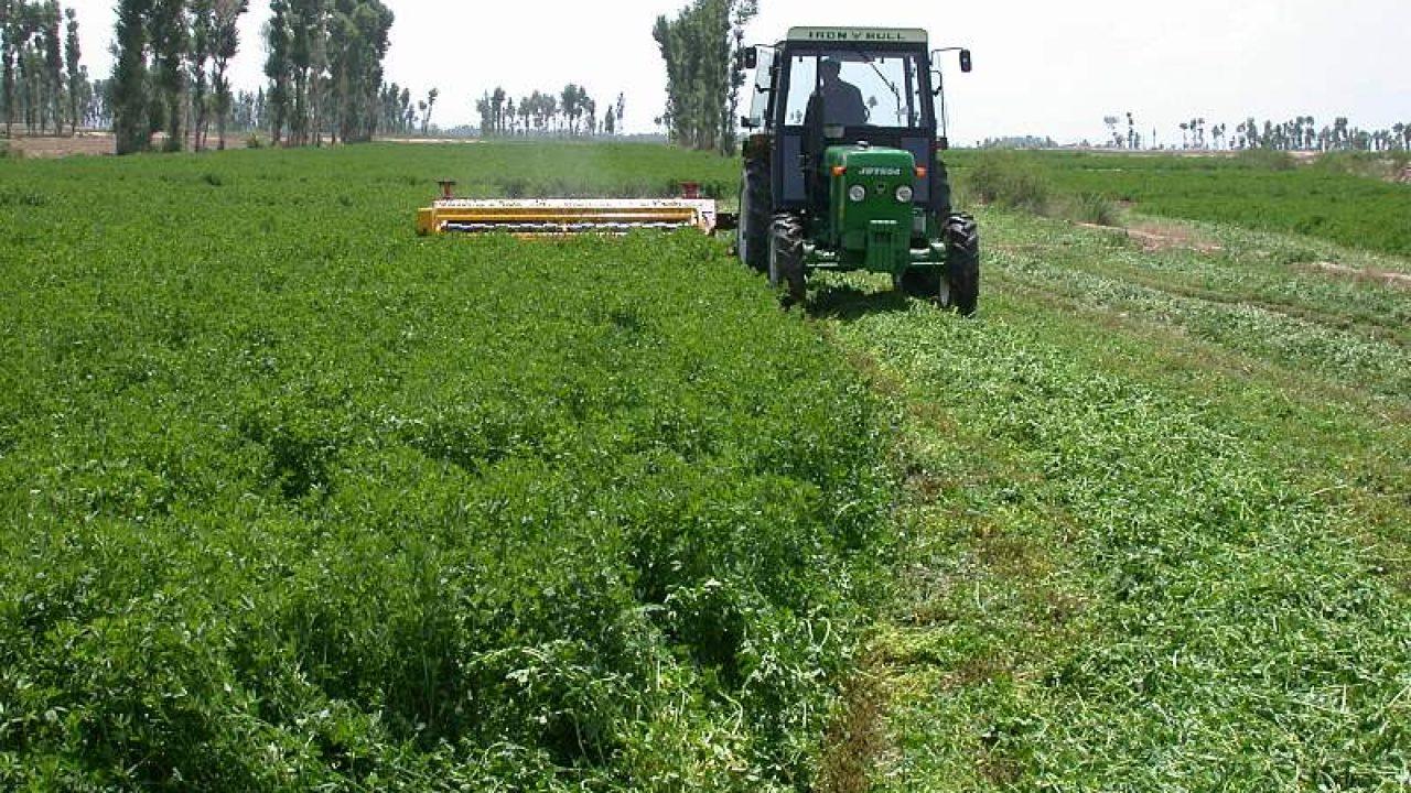 Mercado de fertilizantes: la gran demanda mundial aún sostiene el precio