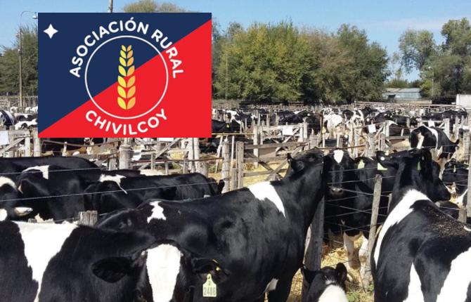 Saenz Valiente Bullrich rematará el miércoles 7 en Chivilcoy a 400 lecheras
