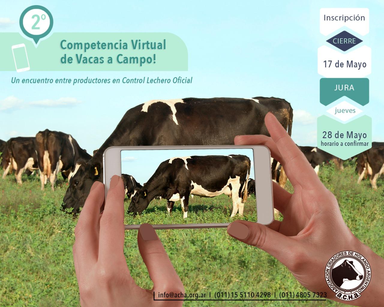 Segunda competencia virtual de vacas a campo: inscripción finaliza lunes 17