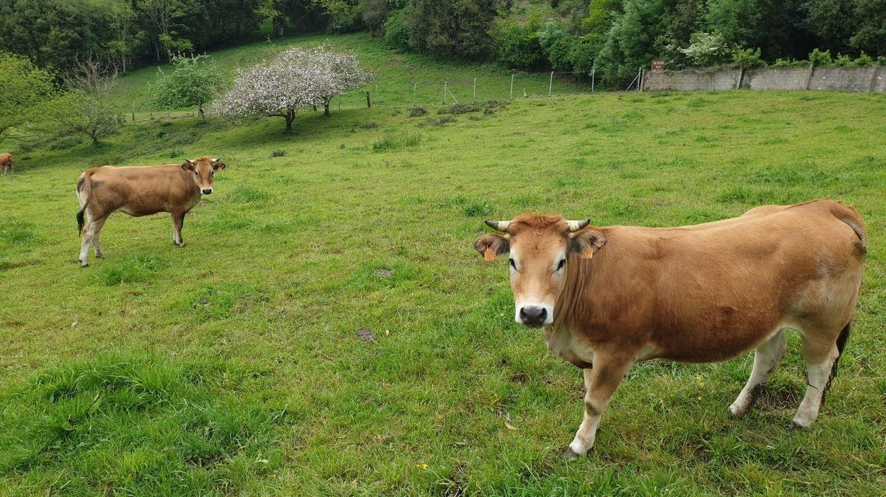 En Europa, se afronta un sostenido debate sobre la nueva política agraria común para la ganadería