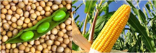 La cotización del maíz cae por debajo de los u$s 258 por tonelada
