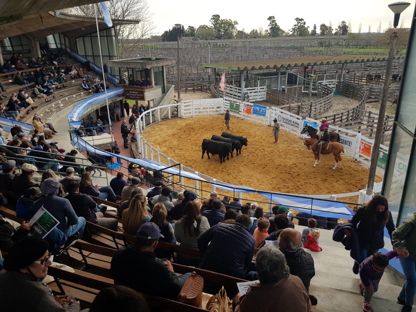 En Gualeguaychú, críticas por política ganadera y restricciones en aplicaciones