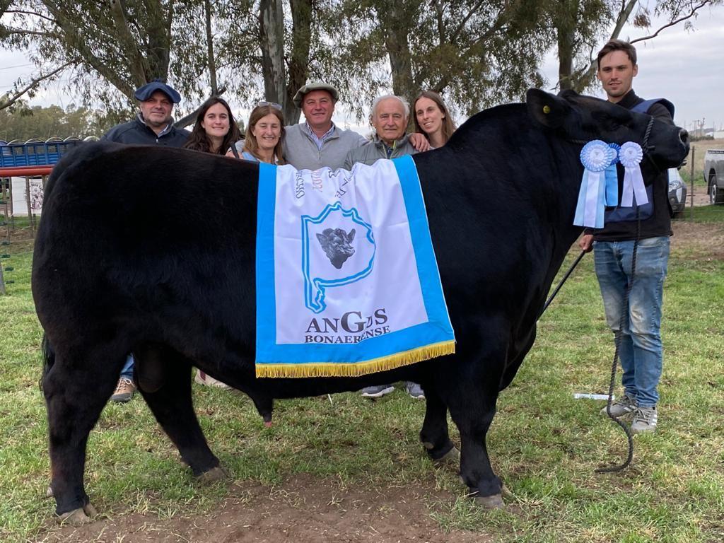 En Bahía Blanca, Aldazábal de Coronel Dorrego se quedó con el Gran Campeón Angus