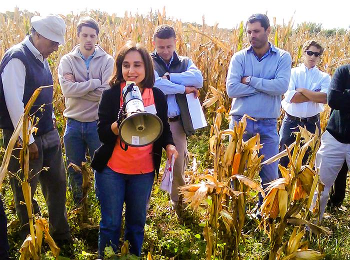 Las enfermedades que pueden afectar los rindes del maíz